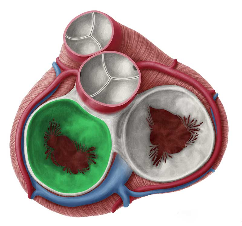 دریچه های قلب